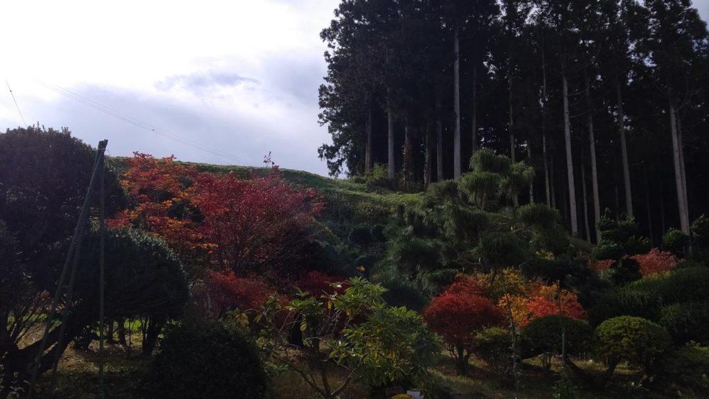 紅葉の松島